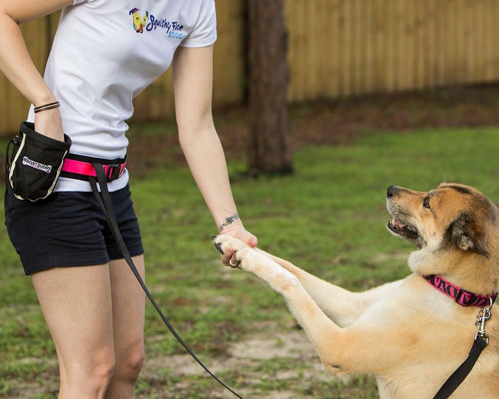 DogTech: Az apportírozás tanítása