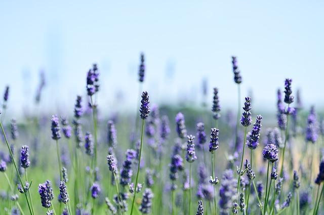 A gyógynövények termesztése házilag is megoldható