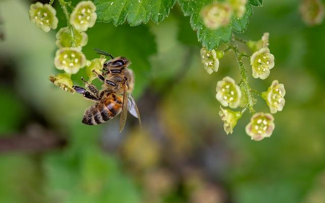 A méhpempő jótékony hatásai