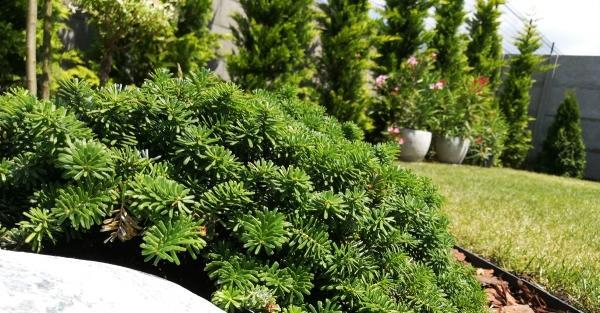 Az áruház, ahol a kerti munka árak alacsonyak